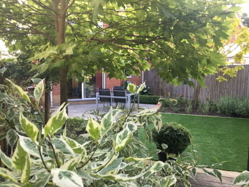 foliage plants for family garden
