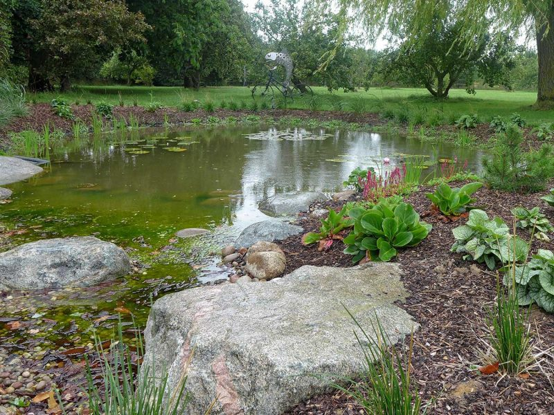 wildlife pond near Frinton on sea a beautiful water feature that helps the environment