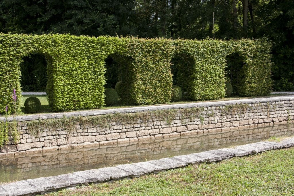 screen made from hedging plants