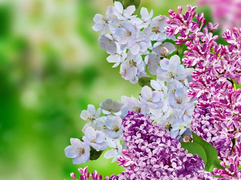 spring colour