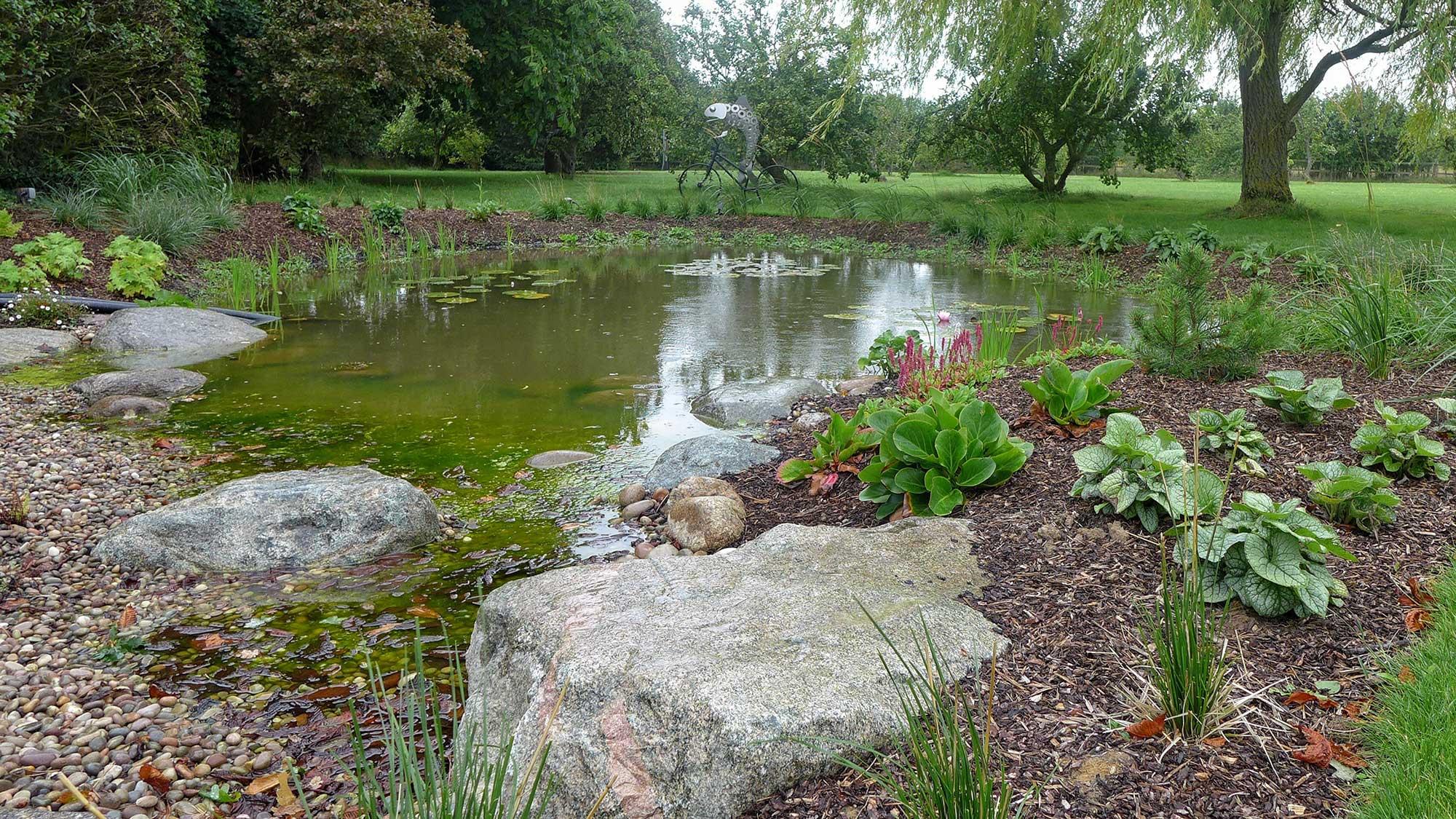 new planting around wildlife pond