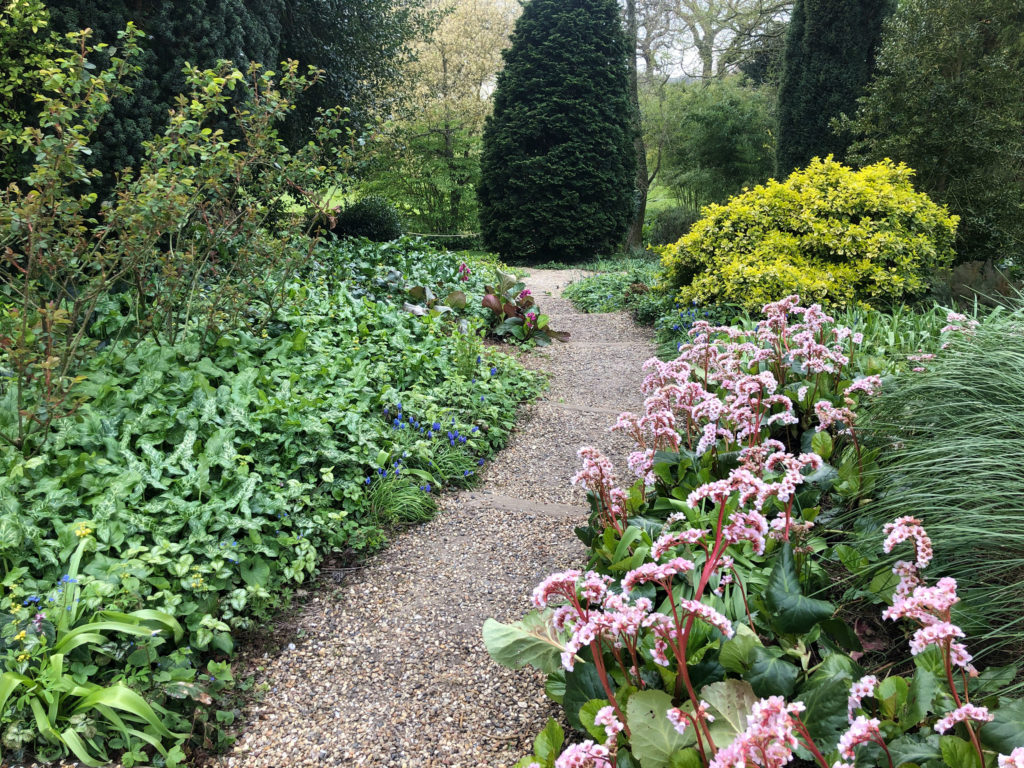 A scene from Beth Chattos garden in Essex with a winding path and bergenia in bloom