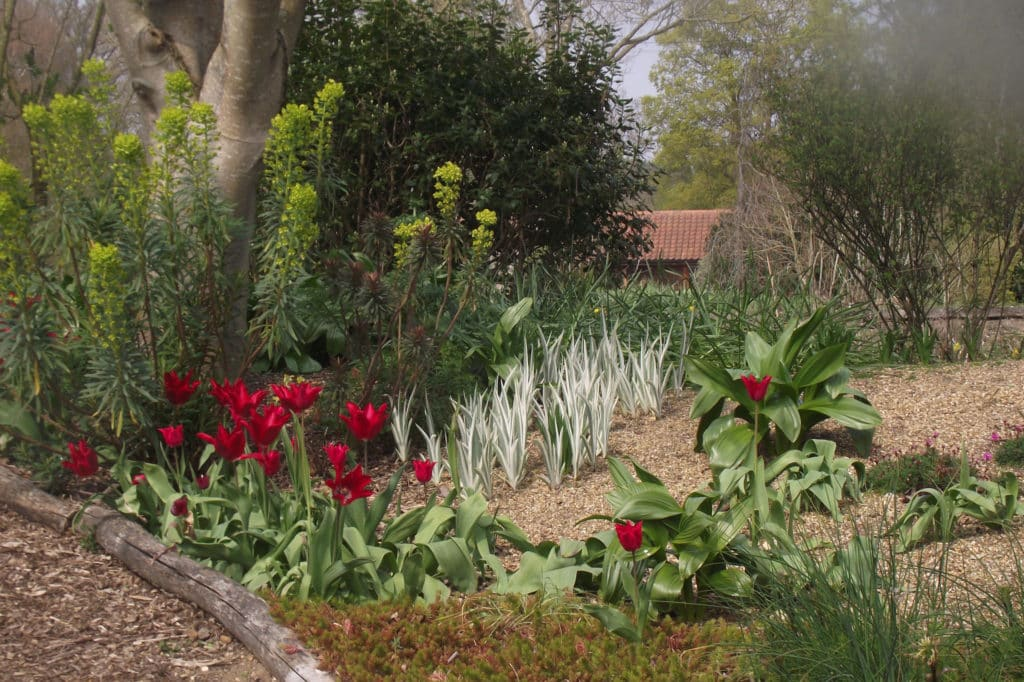 brightly coloured tulips and foliage plants beside a path