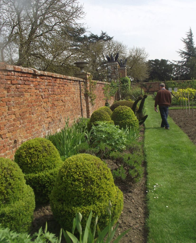 topiary shapes amongst herbaceous plants in a walled garden