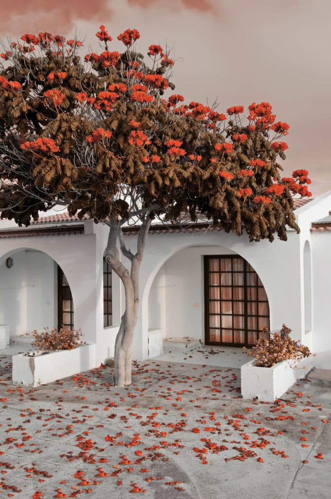 mediteranean courtyard with tree for shade