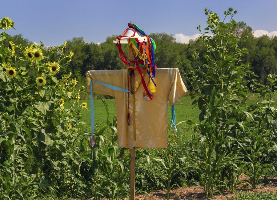 scarecrow in vegetable garden