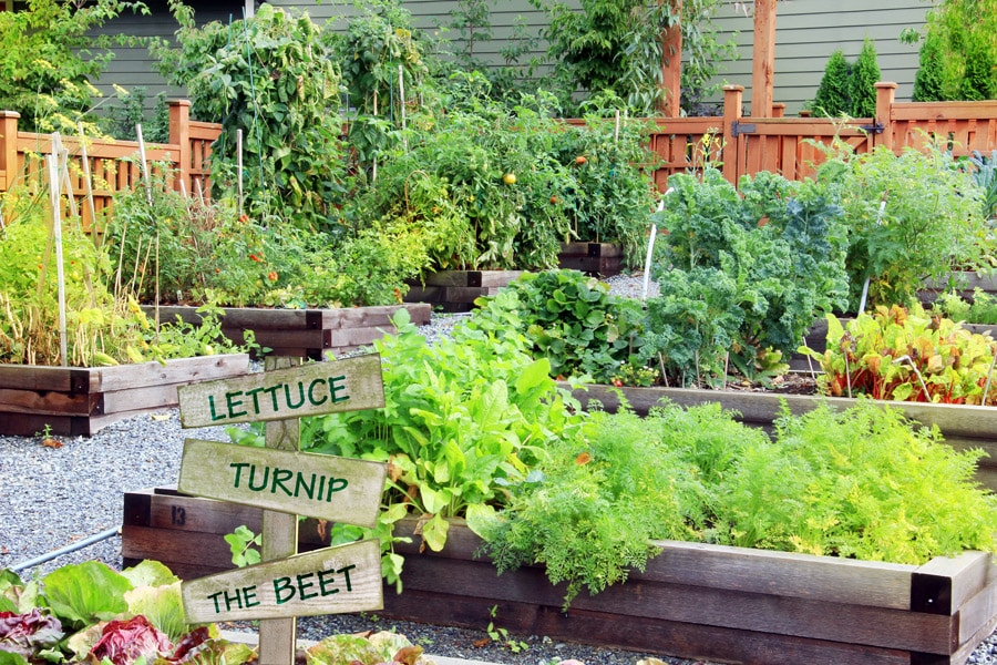 how to style your vegetable garden
