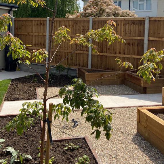 tree in newly landscaped garden