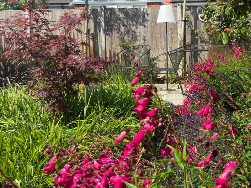 magenta flowers in the foreground of this picture of lifestyle gardens with a seating area