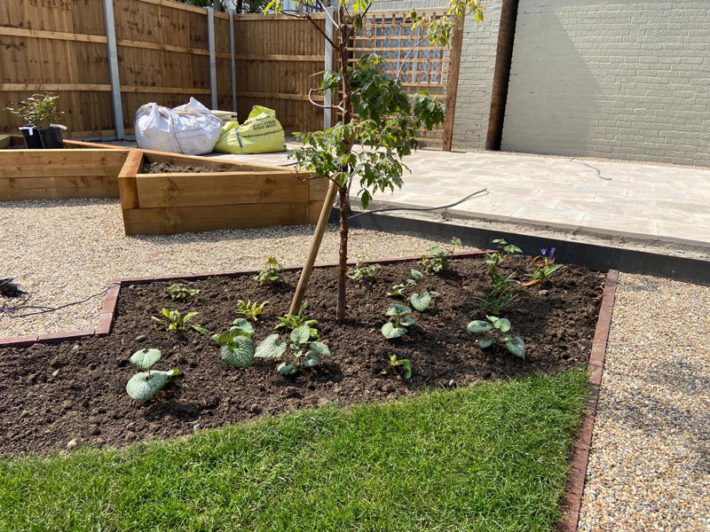 planting border with low maintenance plants
