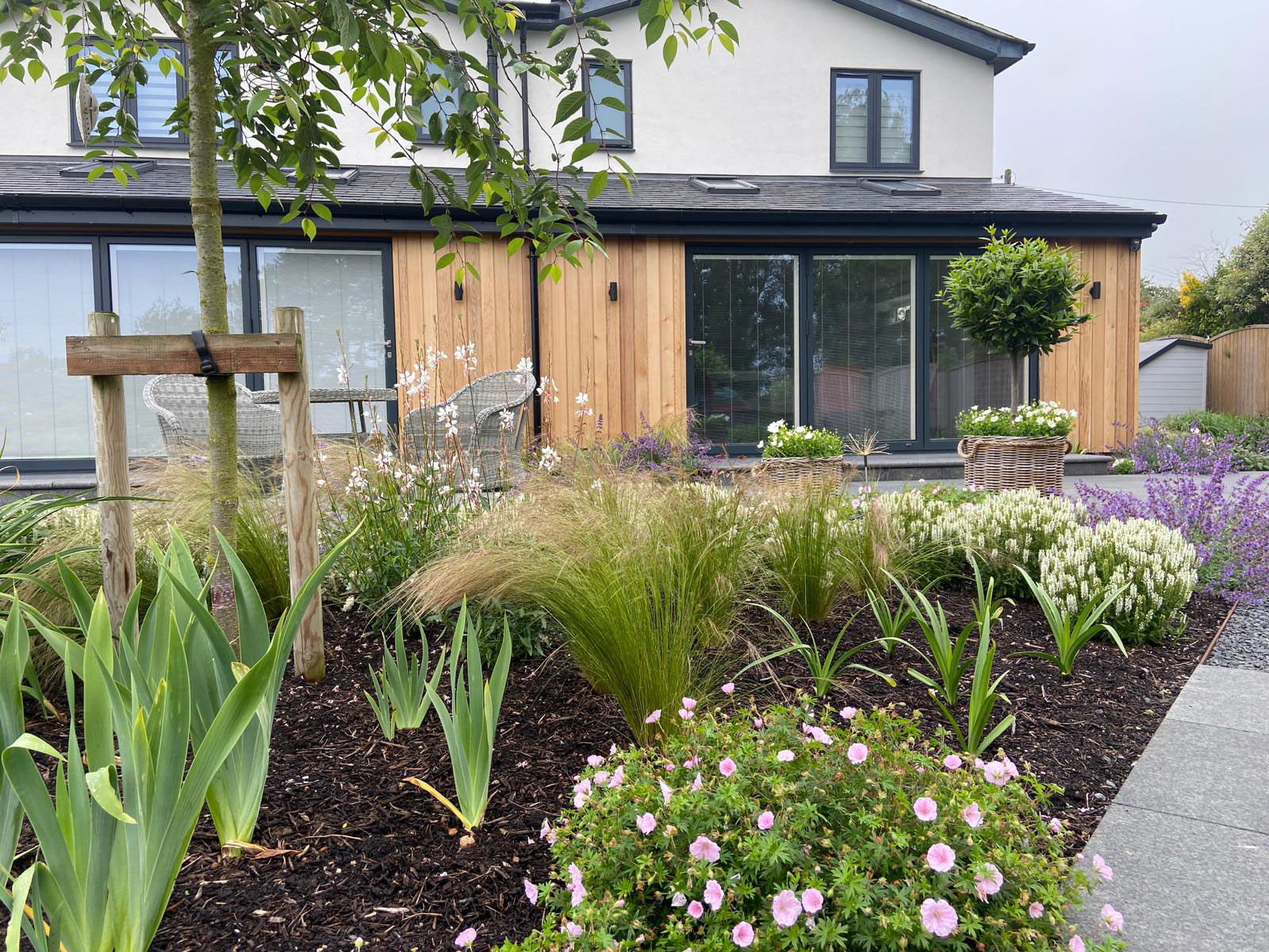 planting for newly landscaped garden with geraniums, iris and grasses
