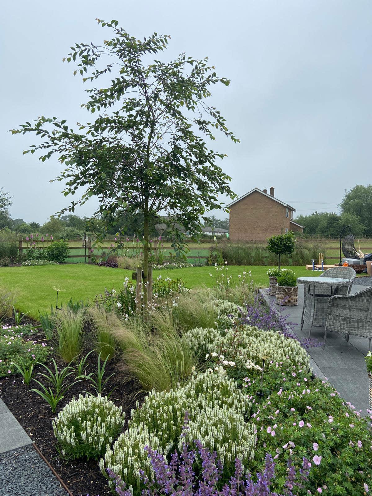 white border in large back garden